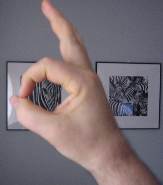 ZEBRAUT-CAC-HÃ…LS-DELIGHTED