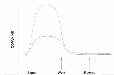 Dopamin vid ökad osäkerhet om belöning