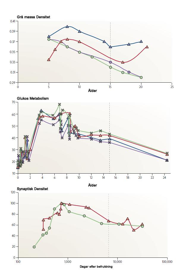 Utvecklingspotentialen och åldern