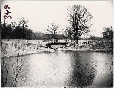 Slottskogen Fågeldammen